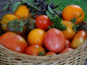 zs-kronisi-tomati